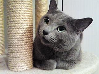 Laughcat